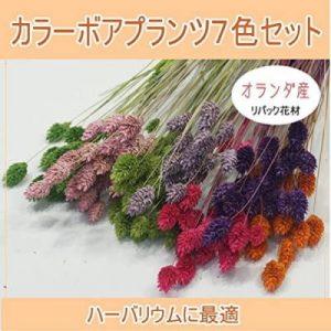 あいむ ドライフラワー花材7色セット